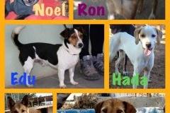 Ron, Noel, Hada, Flipper, Edu y Casper