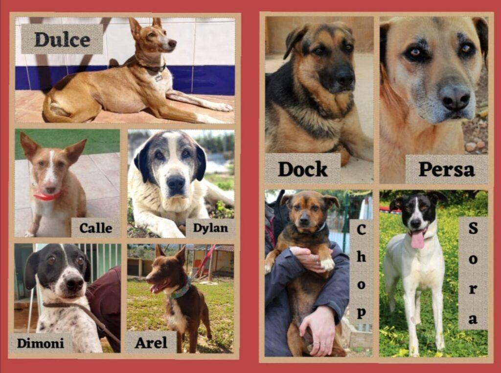 DOCK,PERSA,DYLAN,CALLE,CHOP,SORA,AREL,DIMONI,DULCE